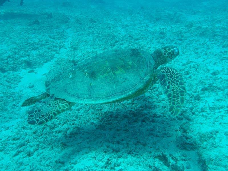 turtle-17918_1280