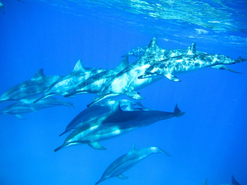 www-drea-dolphin-com-carine-2307480430-copyright-ilemaurice-100512-70-2